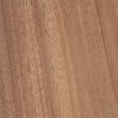 African Mahogany (Khaya senegalensis)