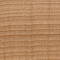 American Beech (endgrain 10x)