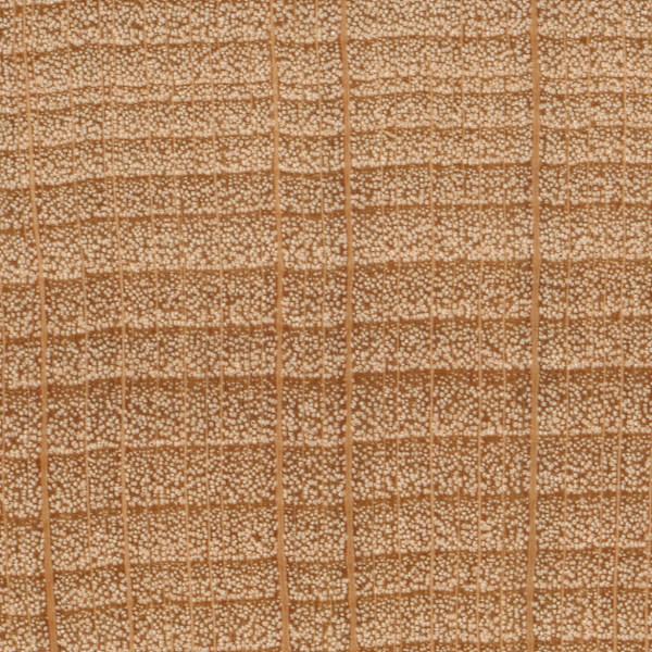 American Beech Wood ~ American beech the wood database lumber identification