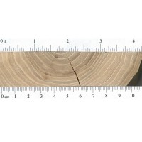 American Elm (endgrain)