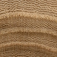 elm wood characteristics
