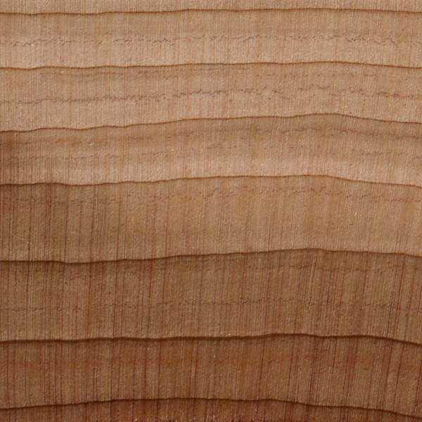 Red Cedar Wood ~ Softwood anatomy the wood database