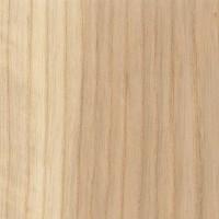 White Ash (Fraxinus americana)