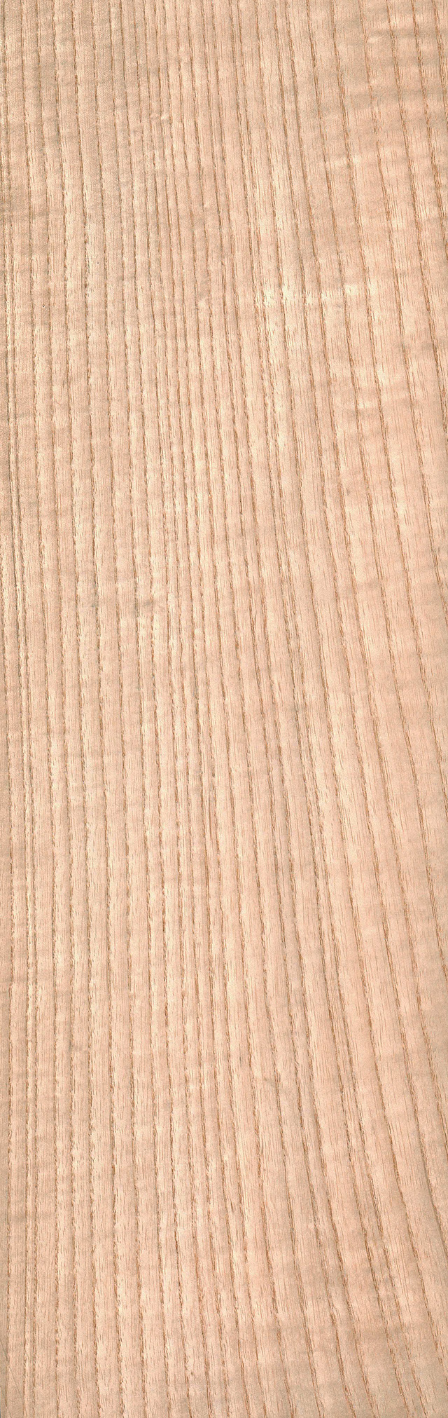 White Ash Wood Grain ~ White ash the wood database lumber identification