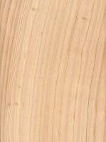 Atlantic White Cedar (Chamaecyparis thyoides)