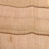 Atlantic White Cedar (endgrain 10x)