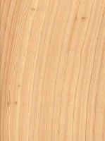 Atlantic White Cedar (sealed)