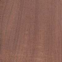 Australian Blackwood (Acacia melanoxylon)