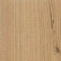 White Cypress Pine (Callitris glauca)