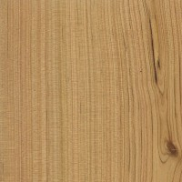 Australian Cypress (sealed)
