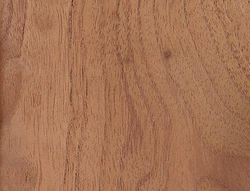 Australian Red Cedar