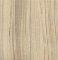 Balsam Poplar (Populus balsamifera)