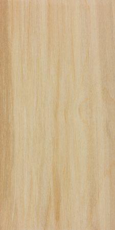Alaska Paper Birch (Betula neoalaskana)