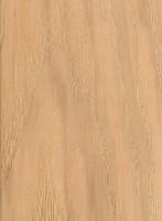 Bitternut Hickory (Carya cordiformis)