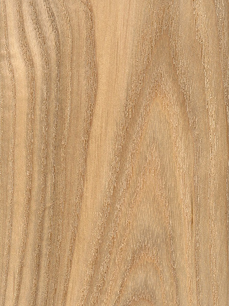 White Ash Wood Grain ~ Black ash the wood database lumber identification