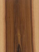 Black Ironwood (Krugiodendron ferreum)