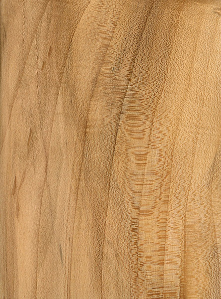 Black Maple | The Wood Database - Lumber Identification (