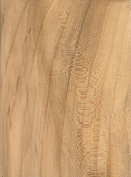 Black maple the wood database lumber identification