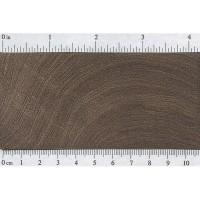 Black Mesquite (endgrain)