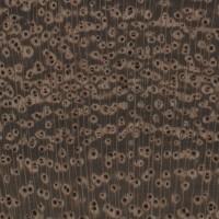 Black Mesquite (endgrain 10x)