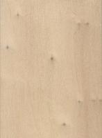 Black Poplar (Populus nigra)