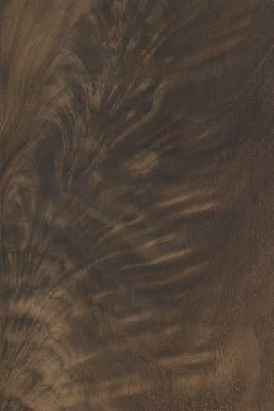 Wood Grain Texture wood grain/texture | the wood database