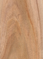 Black Wattle (Acacia mearnsii)