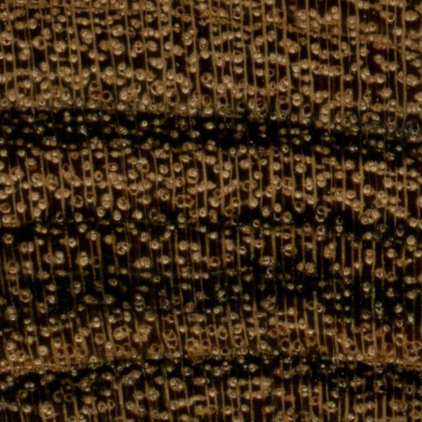 Bocote The Wood Database Lumber Identification Hardwood