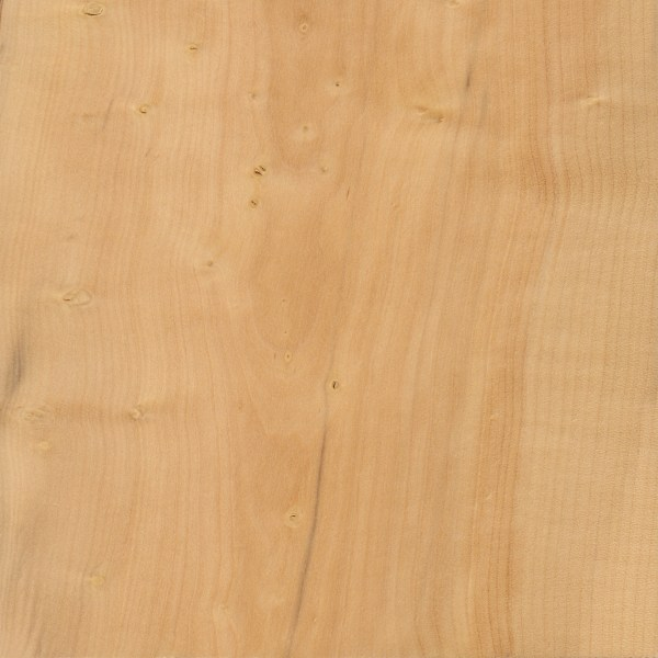 Boxwood the wood database lumber identification hardwood