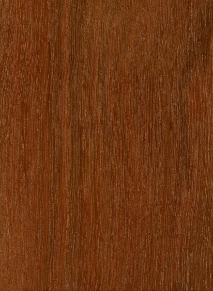 Bulletwood The Wood Database Lumber Identification