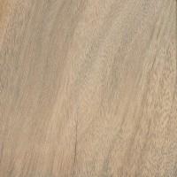 Camphor (Cinnamomum camphora)