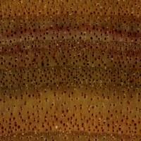 Canarywood (endgrain 10x)