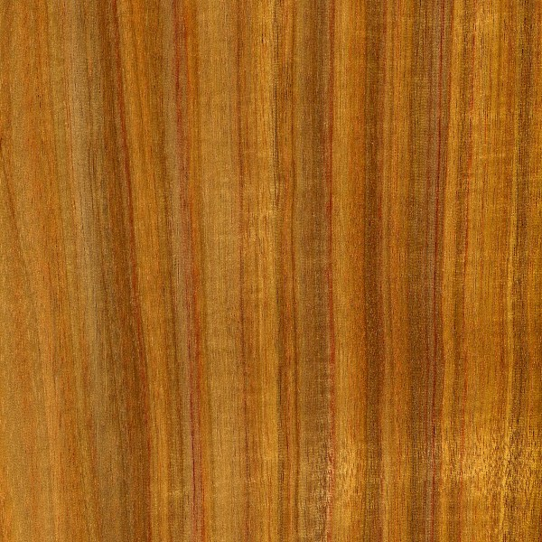 canarywood-sealed-jh