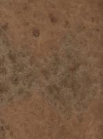"Carpathian Elm burl (11"" x 8.5"")"