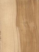Mockernut Hickory (Carya tomentosa)