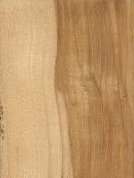 Mockernut Hickory (sealed)