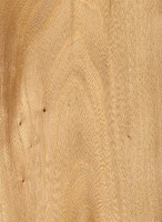 Cedar Elm (sealed)