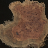 Coolibah burl (sealed)