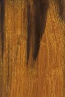Desert Ironwood (sealed)