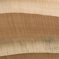 Eastern Hemlock (endgrain 10x)