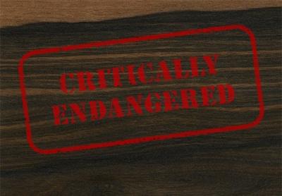 Ebony: Endangered