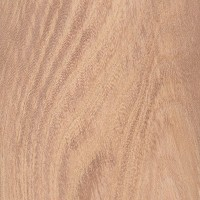 Ulmus wood
