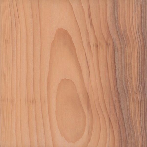 european yew the wood database lumber identification softwood