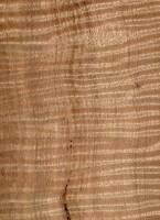 Eucalyptus obliqua (sealed)