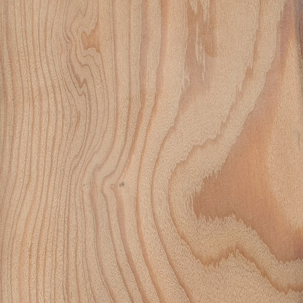 European Larch The Wood Database Lumber Identification