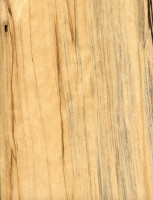 Gray Birch (sealed)