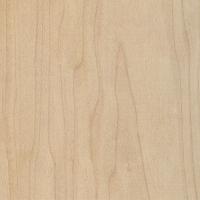 Hard Maple (Acer saccharum)