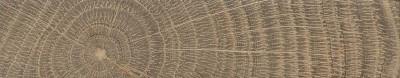 Holm Oak (endgrain)