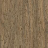 Indian Silver Greywood (Terminalia bialata)