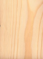 Jack Pine (Pinus banksiana)